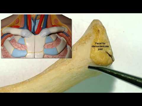Medicamente în tratamentul sinovitei genunchiului