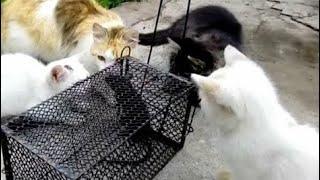 Ловушки с приманкой для крыс