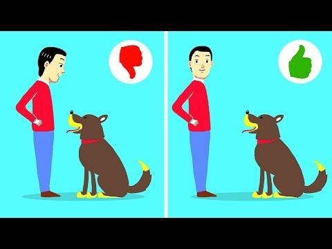 10 Easy Ways to Train a Naughty Dog