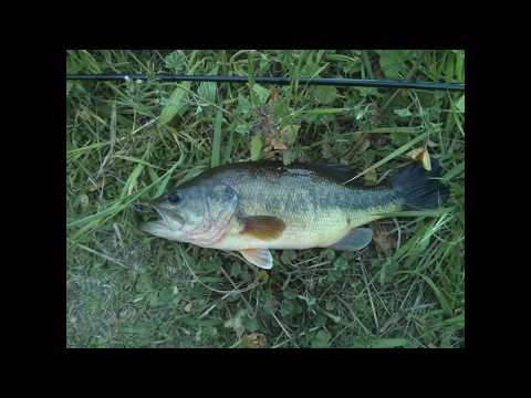 Urban Perc Ponds Bass Fishing – Blooper