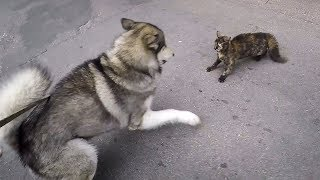 Кровавая драка собаки против кота