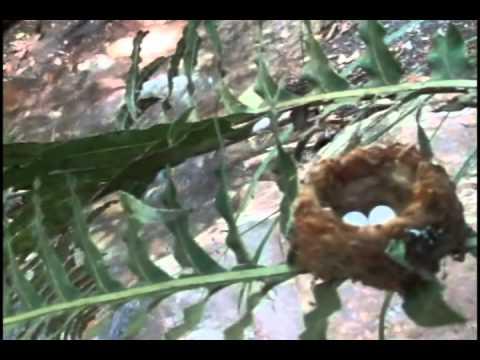 De que o fungo em dedos do pé aparece