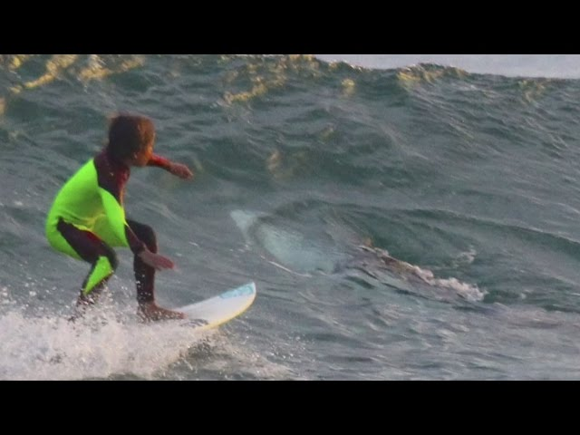 Young surfer unknowingly shares wave with a shark, and his dad captures it on camera