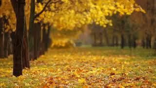 Very Nice Autumn Video || Nature love || WhatsApp status