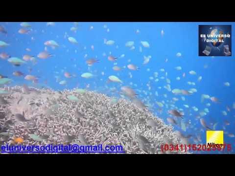 Videocamara sumergible,Rosario,Santa Fe,Nikon AW120,camara subacuatica