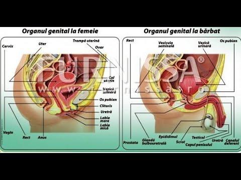 Negi genitale ale căii de infecție