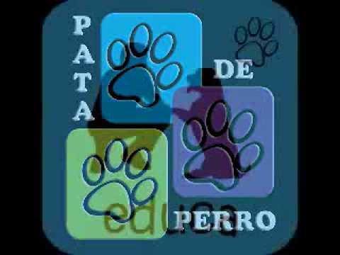 Pata de perro | protección contra los animales