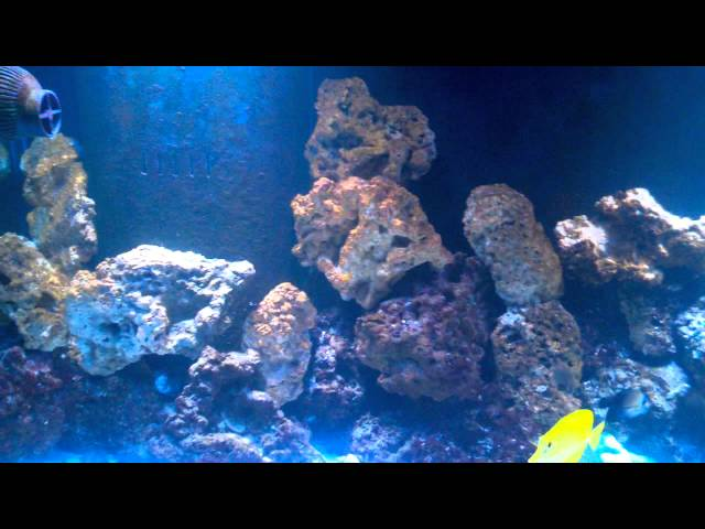 Lower nitrates in your reef tank with sugar?.. Zero nitrates with no water changes? DAY 1 OF TEST