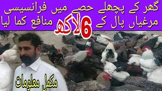 Desi hen farming in Pakistan | golden misri hen farming | desi hen