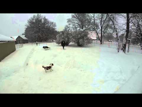 Melissa and The Dogs Playing In The Snow