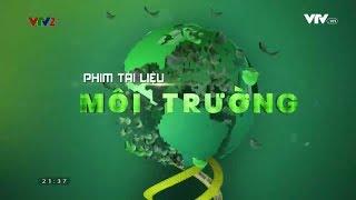 phim-tai-lieu-khoa-hoc-mua-chim-lam-to-phan-1