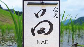 Nae - promo video launched