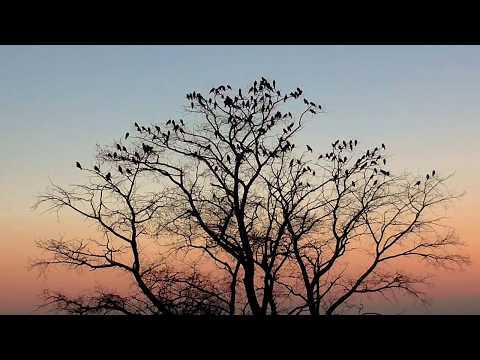Звуки природы.Летний вечер в деревне.Пение сверчков.Лай собак
