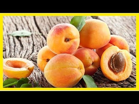 Will Eating Apricot Seeds Kill You? Know the Truth!