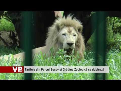 Tarifele din Parcul Bucov și Grădina Zoologică se dublează