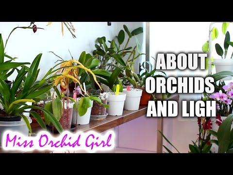 , title : 'How much light do orchids need? - Low, medium and high light Orchids