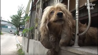 Ragged Dog Whose Ears Are Turned To Stones?! | Kritter Klub