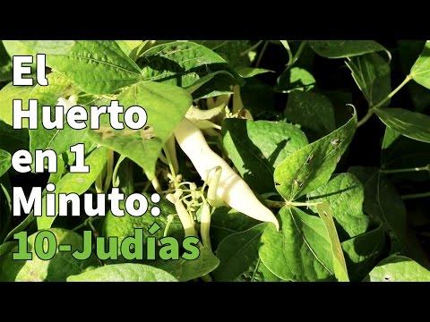Semillas de  Judía SUPER VIOLET 100gr.