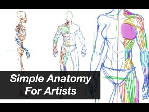 Simple Anatomy For Artists - Week01