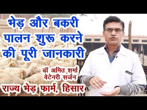 , title : 'भेड़ और बकरी पालन शुरू करने की पूरी जानकारी, Sheep n goat rearing training, investment and profit