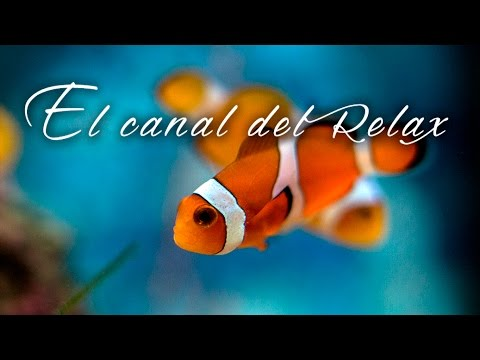MUSICA RELAJANTE PECERA DE COLORES, RELAXING MUSIC COLOURING FISHBOWL