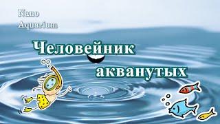 #Человейник_акванутых Клиповое мышление.