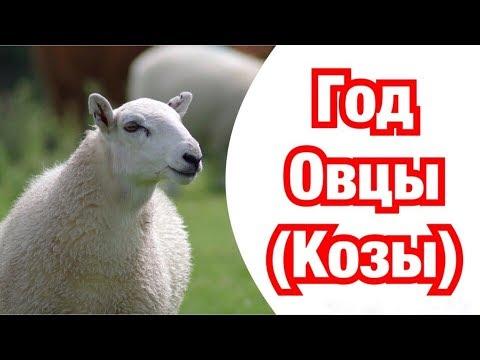 Год Овцы(Козы) – описание и характеристика знака