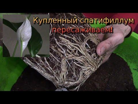 Минусовка песни женское счастье овсиенко
