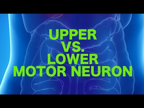 Video Upper vs. Lower Motor Neuron Lesions || USMLE