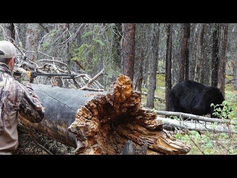 Medvěd za pomocí foukačky?
