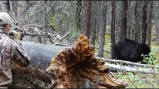 Bear killed with Blowgun