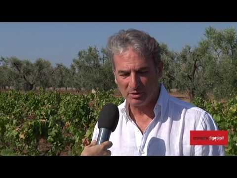 La vendemmia del vino più buono d'Italia