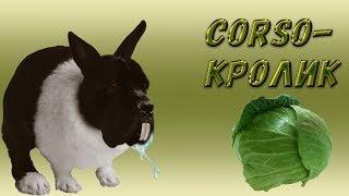 Как собака Кане Корсо любит капусту.#canecorso