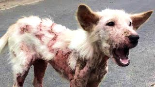 Sick Street Dog Can't Stop Wagging Tail When Rescuer Comes To Rescue Her