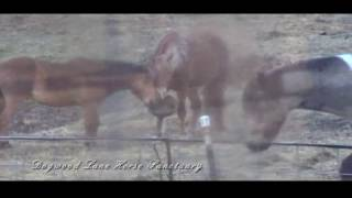 Panning For Oats?  2-20-2017 Dogwood Lane Horse Sanctuary