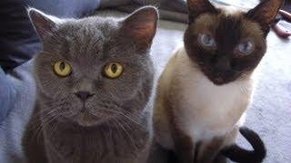"""Meine Katzis -das """"Dickerchen"""" und """"Frau Katze"""" :-)"""