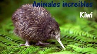 Animales Increíbles - Kiwi