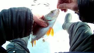 Отчеты о рыбалке в шарыпово