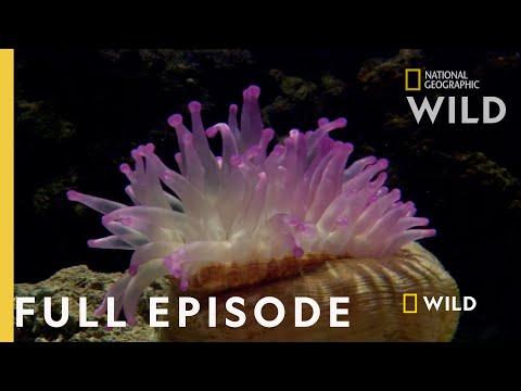 Survival of the Weirdest (Full Episode) | World's Weirdest