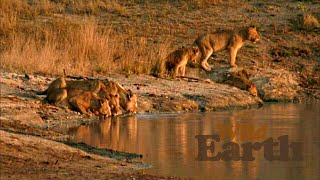 2020 Times  The sunrise safari starts at 05:00 local time, which means start times of 22:00 EST, 19:00 PST, 03:00 in the UK [GMT], 04:00 in Central Europe, and 14:00 Sydney time.  The sunset safari starts at 16:00 CAT local time, 09:00 EST, 06:00 PST, 14:00 in the UK [GMT], 15:00 in Central Europe, and 01:00 Sydney time.   When safariLIVE isn't live, you can view the feed from the Djuma Waterhole camera, from the heart of Djuma Private Game Reserve in the Sabi Sand/greater Kruger National Park area.