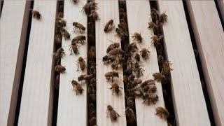 how to get rid of bees in siding