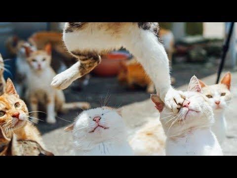 , title : 'Я РЖАЛ ПОЛЧАСА. Смешные Коты и Собаки. ПРИКОЛЫ С ЖИВОТНЫМИ. #23'