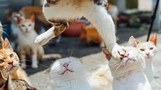Я РЖАЛ ПОЛЧАСА. Смешные Коты и Собаки. ПРИКОЛЫ С ЖИВОТНЫМИ. #23