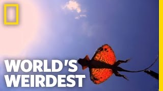 World's Weirdest - The Flying Dragon