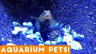 Funny Pets at the Aquarium | Funny Pet Videos