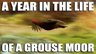 Go get a shot of Grouse