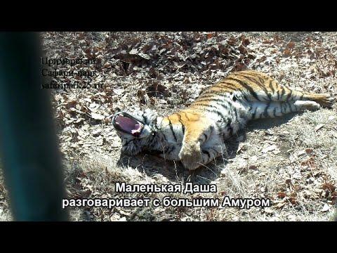 Маленькая Даша разговаривает с большим Амуром - Приморский Сафари Парк