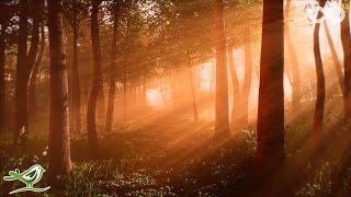The Elves • Wunderschöne Fantasiemusik zur Entspannung
