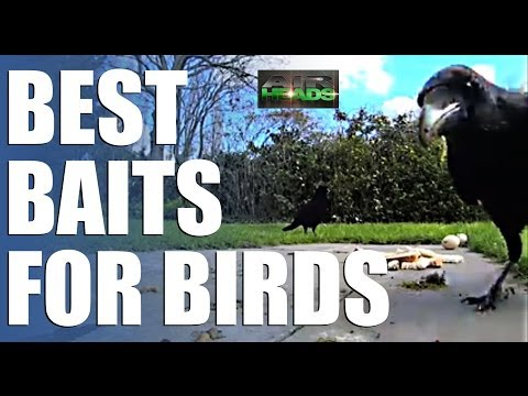 AirHeads – Best Baits for Birds, episode 7