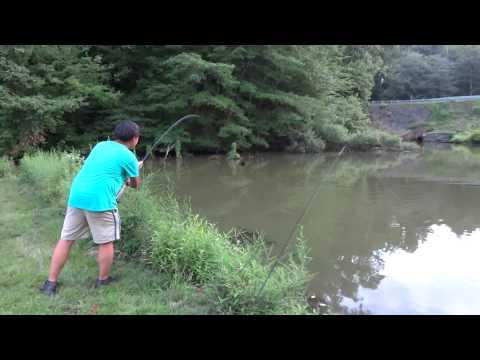 Carping at Driscoll Pond, NJ.